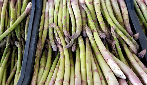 Asparago Verde 2