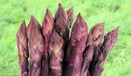 Asparago viola 1
