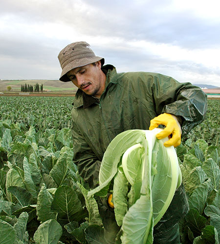 giardinetto-cooperativa-produttore